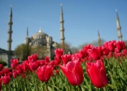Истанбул-фестивал на лалетата